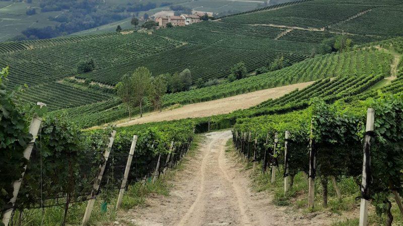 Le Langhe, tierra de viñedos y Patrimonio de la Humanidad